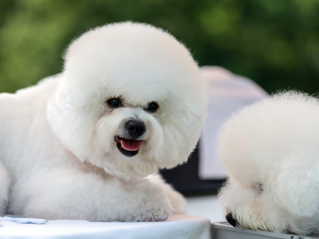 lucky-pennys-dog-grooming-roseville-ca
